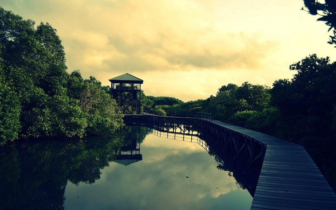 Mangrove Tourism in Indonesia with Astonishing view