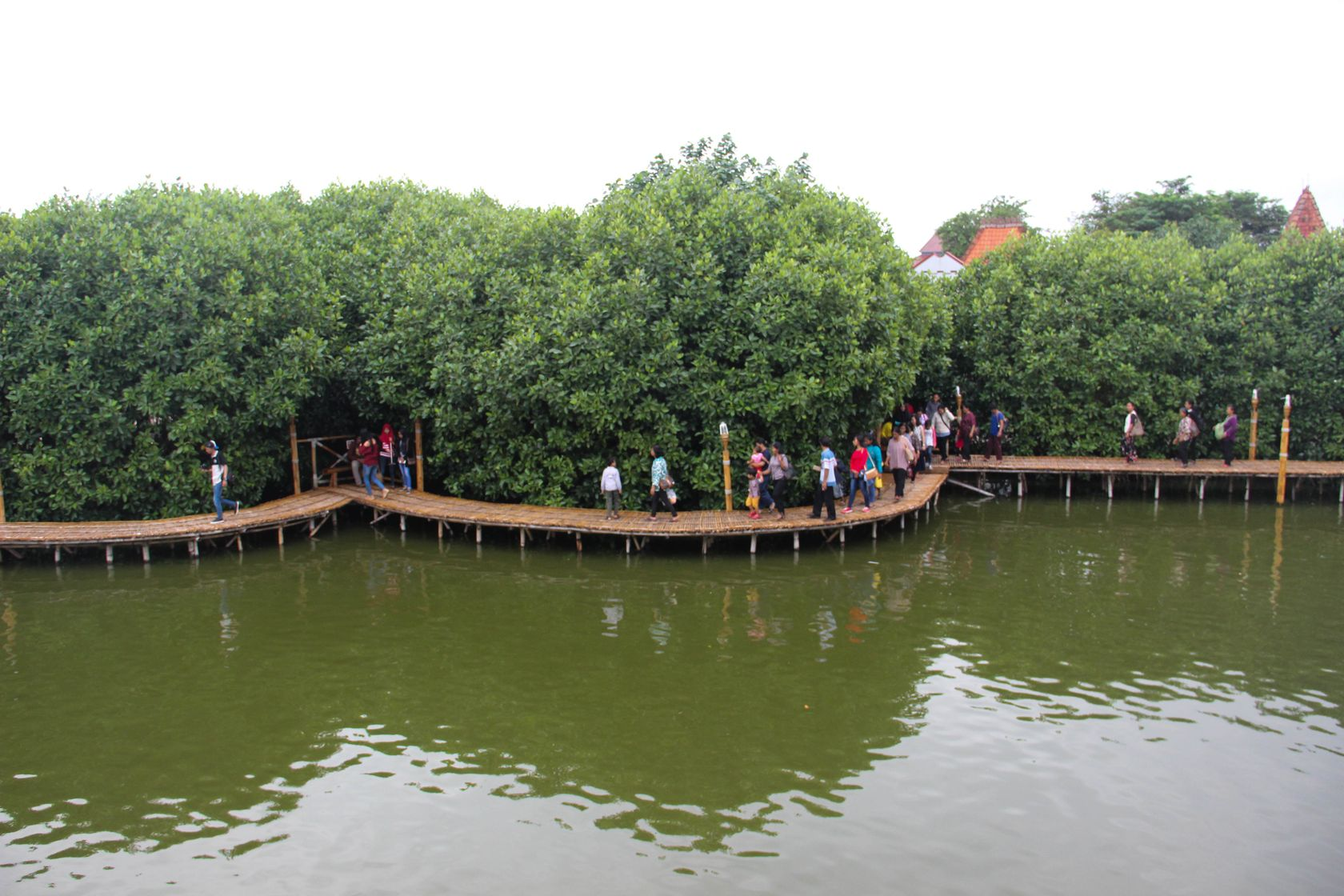 mangrove-tourism-in-indonesia-6.jpg