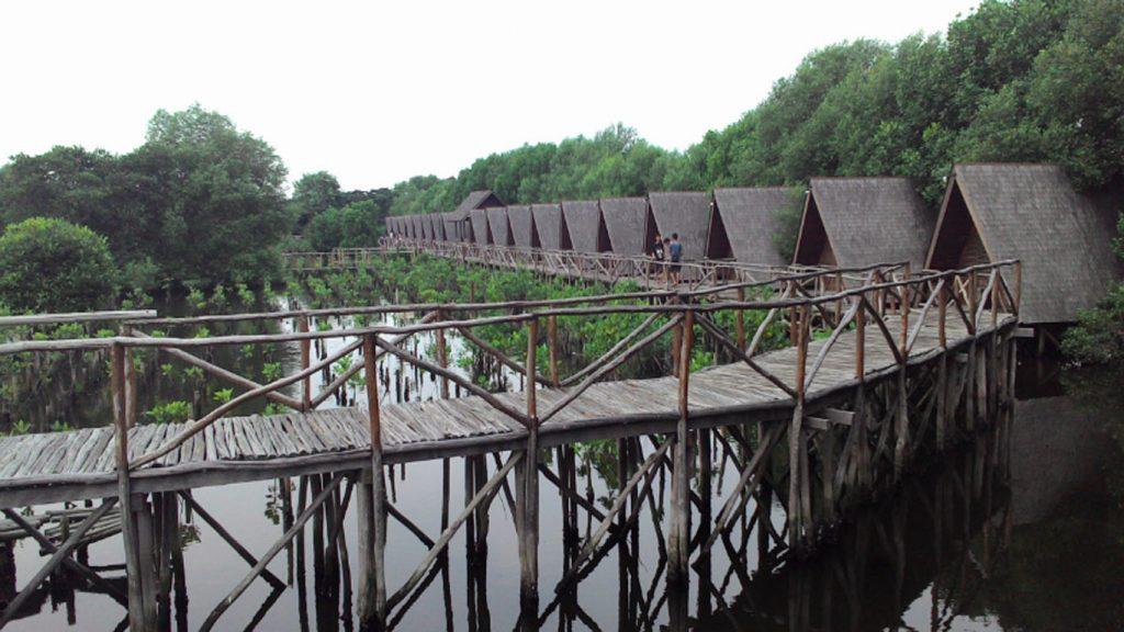 mangrove tourism in indonesia