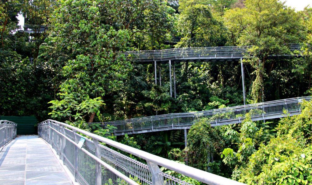 Forest Walk Singapore