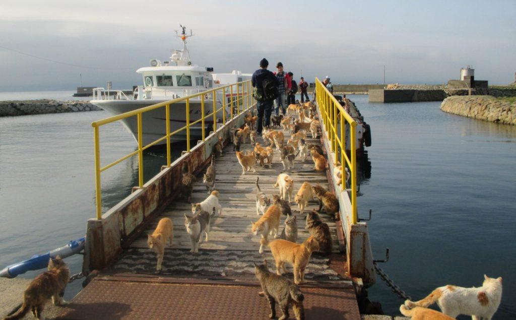 aoshima cat island in japan
