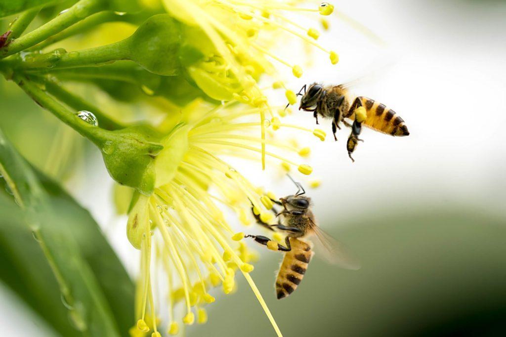 bees extinction