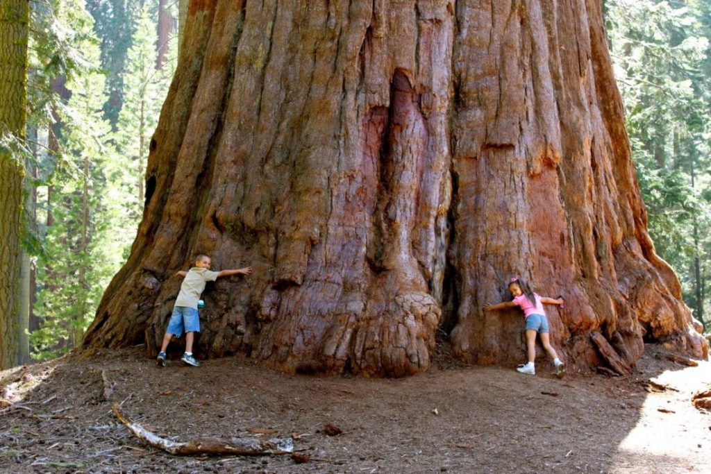 The Tallest Tree