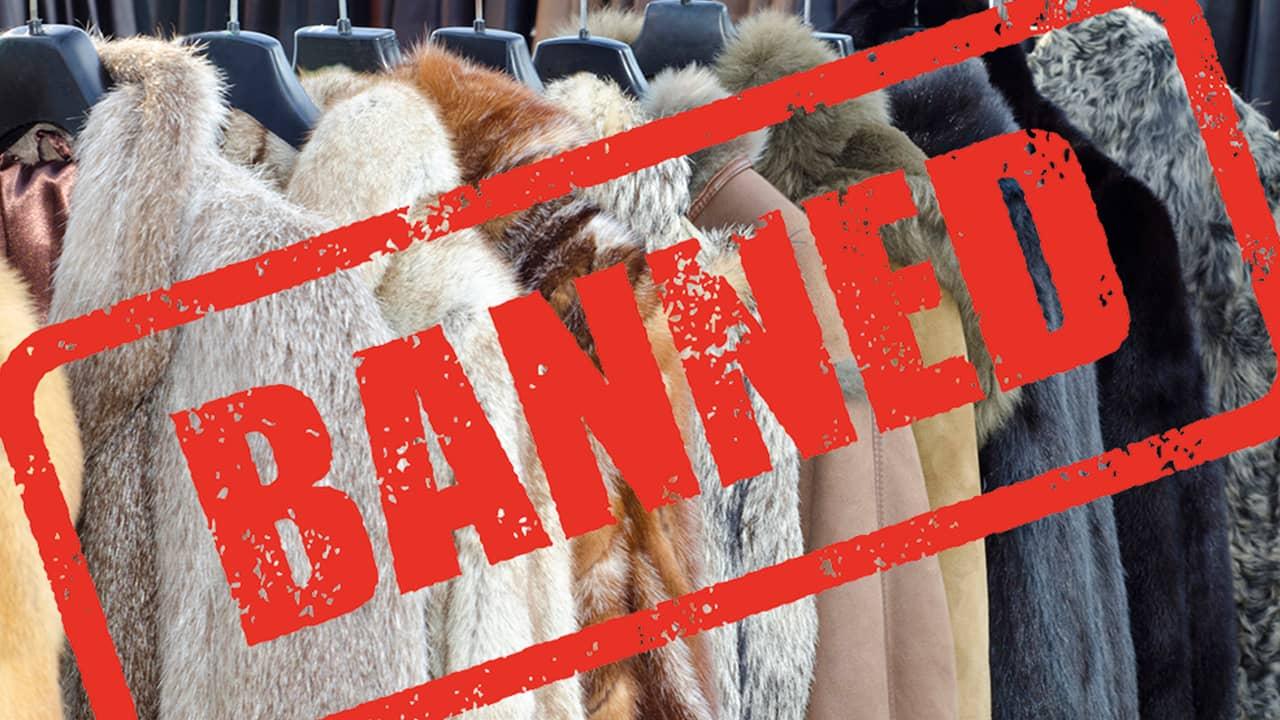 List Of Fur Free Luxury Brands Horn Necklace Sarah Beekmans