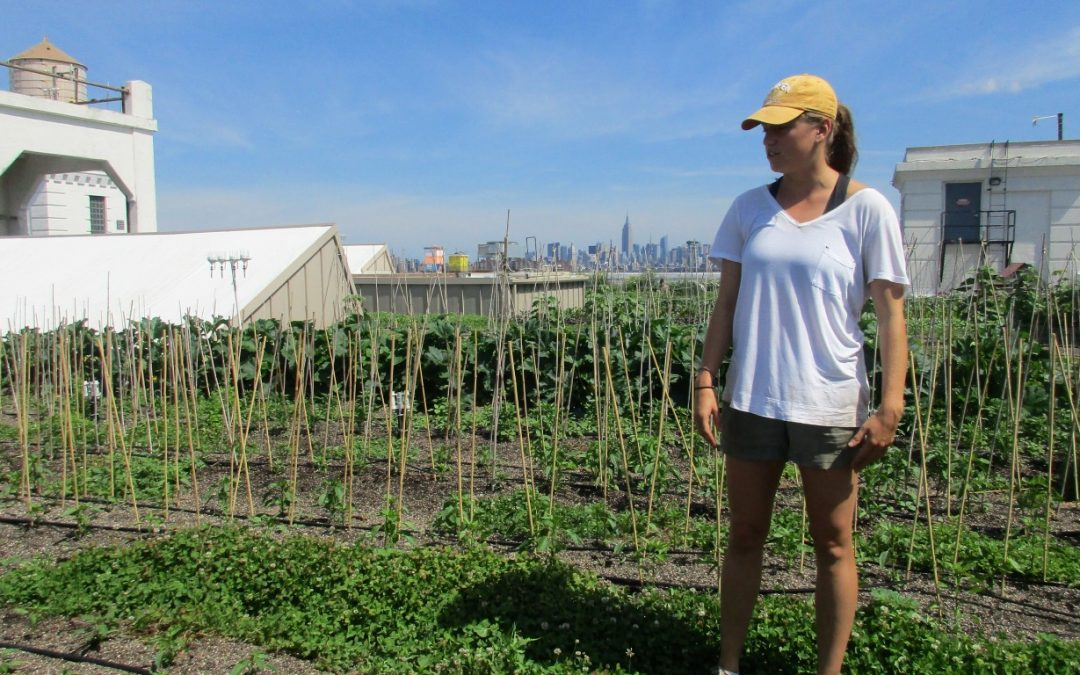 Michelle Cashen Quit a Desk Job To Work on a Rooftop Farm