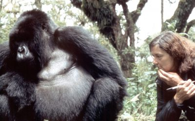 Dian Fossey Narrated Her Life With Gorillas