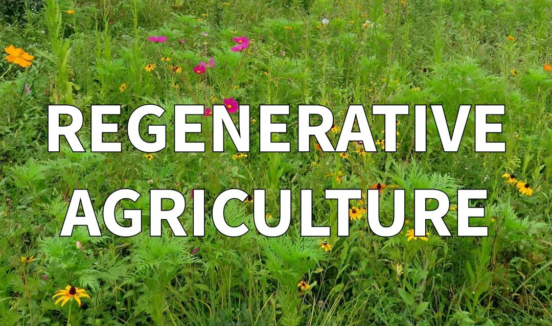 Regenerative Agriculture is a Solutions for Sustainable Fashion
